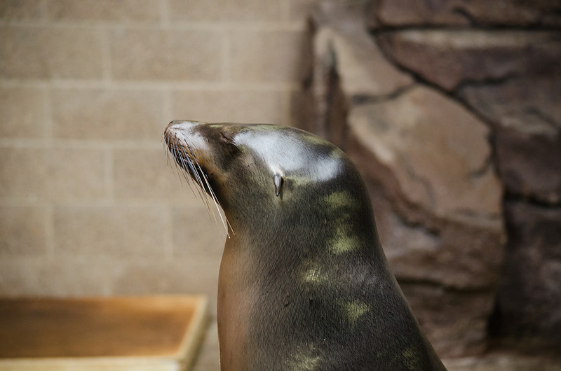 Image of seal